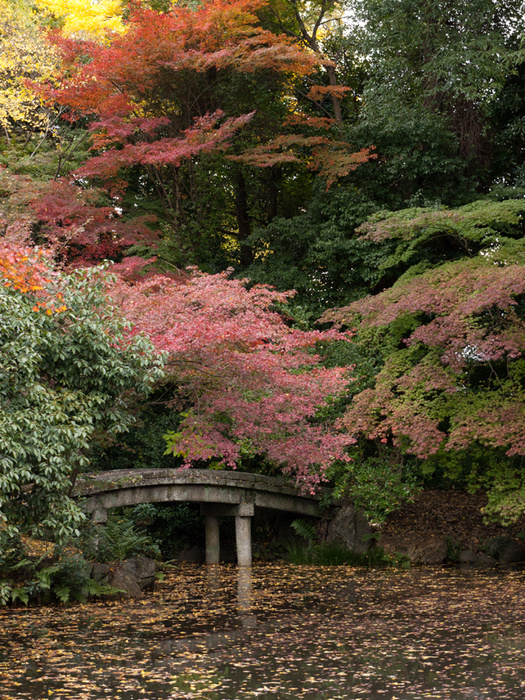 japanese bridge in Autumn