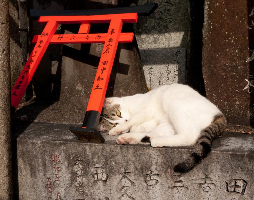 catnap at Fushimi