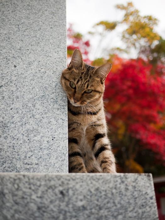 cat at Fushimi