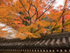japanese rooftop in Autumn